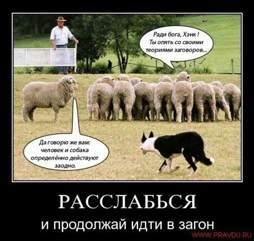 человеко-стада